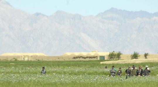 Opiumernte in Bala Baluk, Afghanistan <br/>Foto von isafmedia