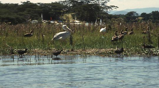 Der Naivashasee wird bei der Rosenproduktion durch Abwässer belastet
