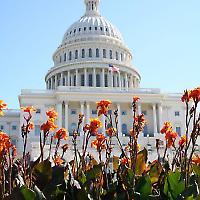 Geben und Nehmen auf Capitol Hill