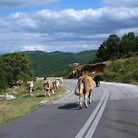 Auf der Überholspur in Griechenland <br/>Foto von underthesun